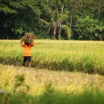 Menilik Wacana Impor Beras dan Suara Hati Petani Lokal
